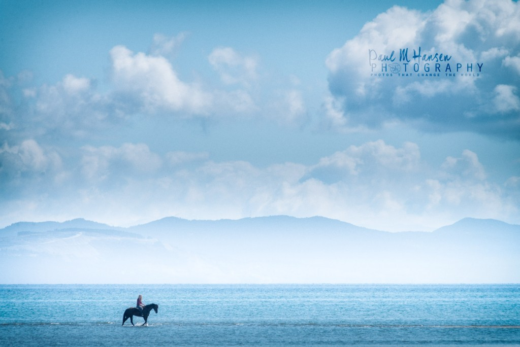 Horses at Kye Bay - Comox Valley