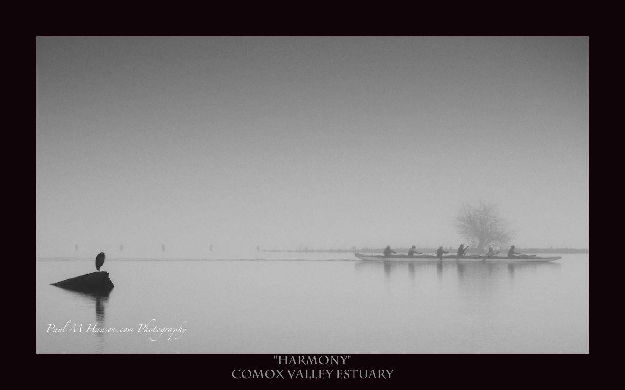 Comox Valley Estuary