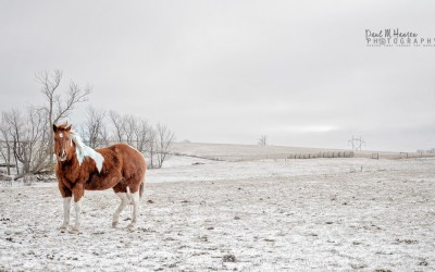 Lessons from shooting horses in Wisconsin